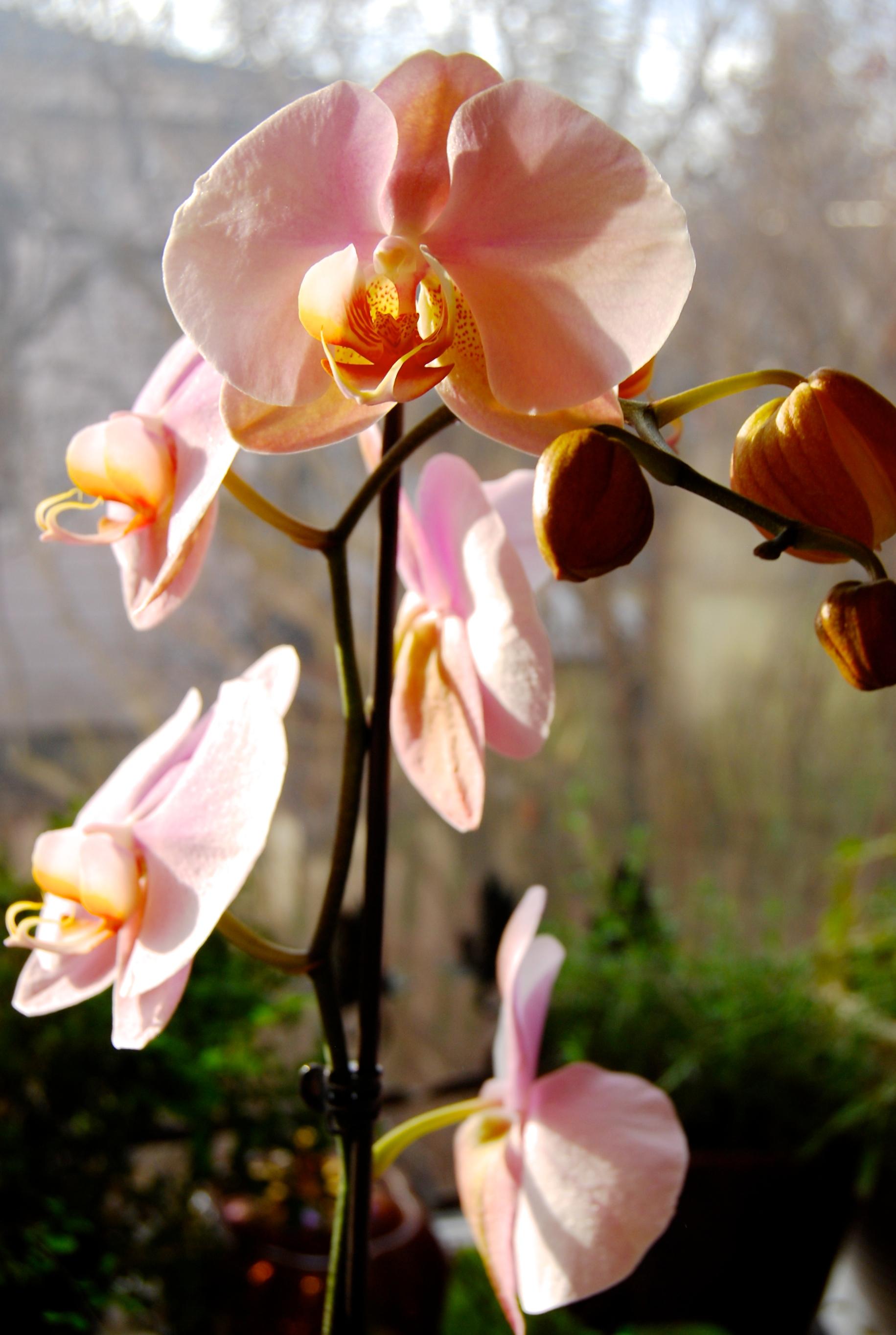 Eco Flowers