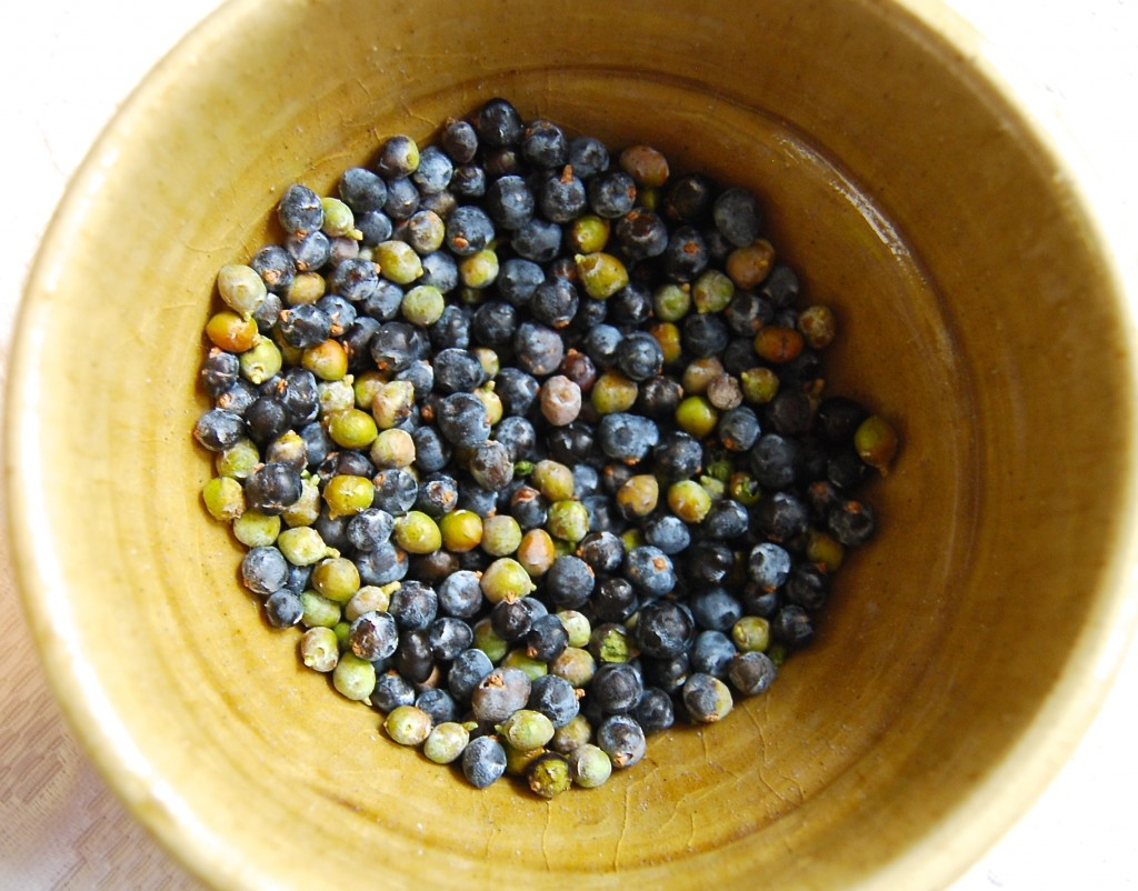 Fresh Montana Juniper Berries